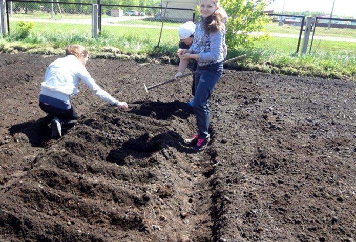 Подготовка грядок для посадки тюльпанов