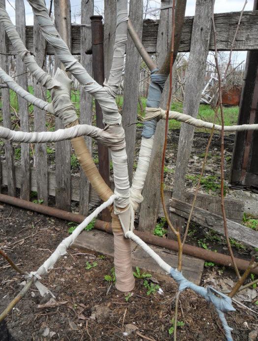 Ствол дерева обёрнут мешковиной