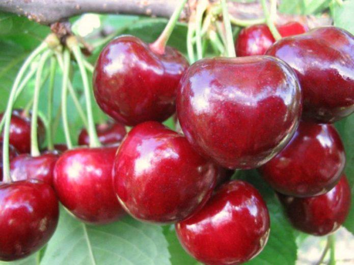 Плоды черешни Крупноплодная