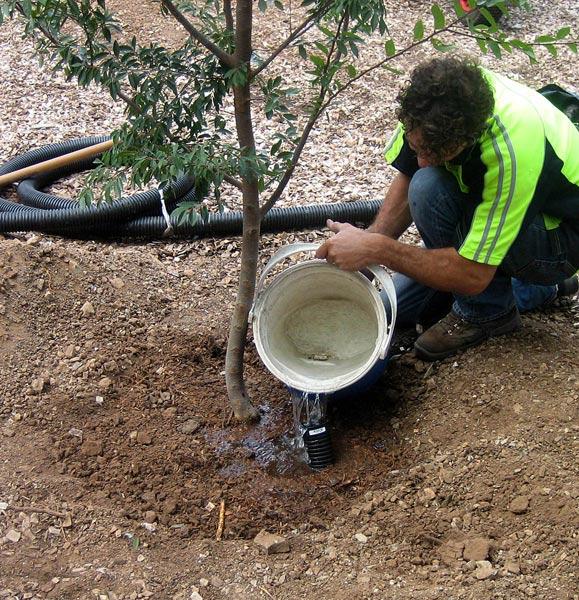 Полив плодового дерева
