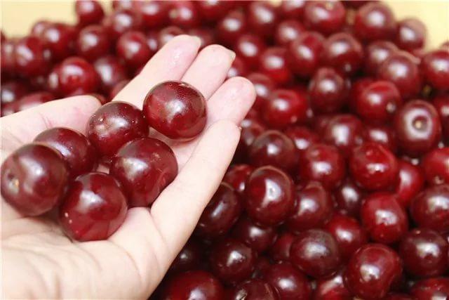 Ягоды вишни в руке