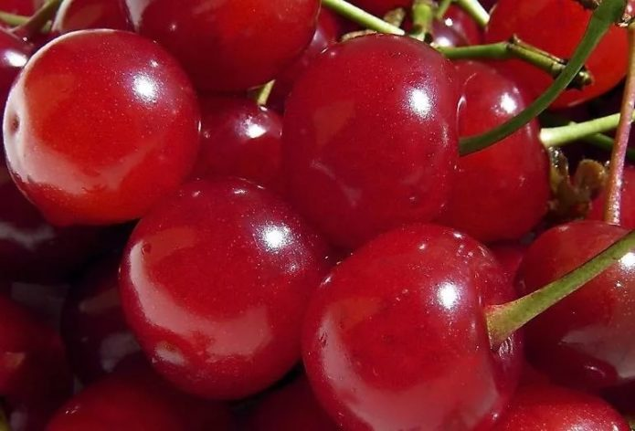 Ягоды вишни сорта Шпанка