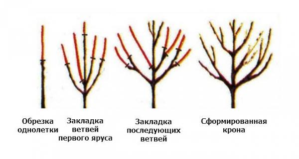 Схема формирующей обрезки