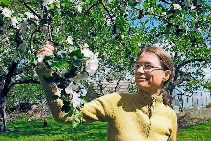 Цветущая ветка вишни Подбельская