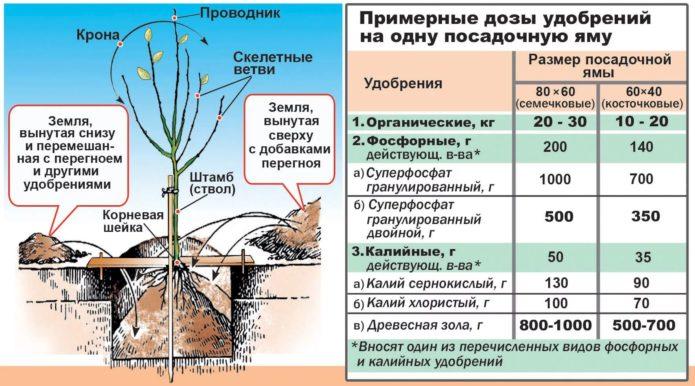Удобрения, применяемые при посадке
