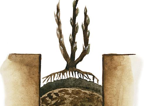 Посадка смородины в яму