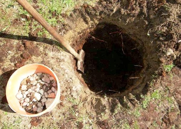 Посадочная яма для садовой черники