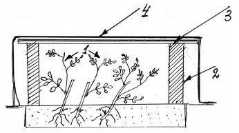 Укрытие зелёных черенков шиповника на зиму