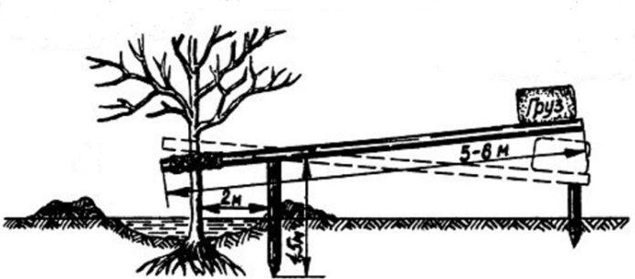 Вытягивание дерева из земли при заглублённой посадке