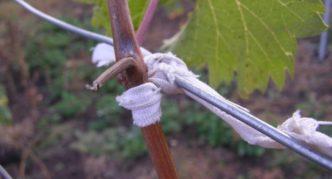 Полоски ткани для крепления винограда