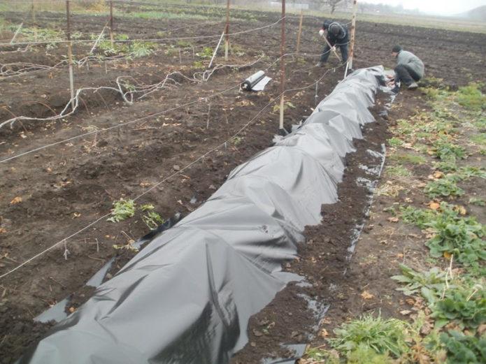 Сухое укрытие винограда