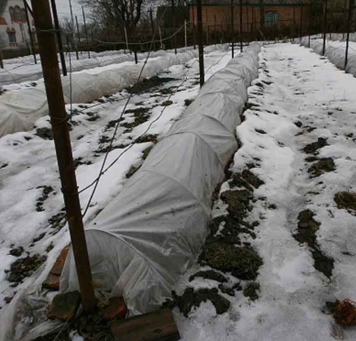 Укрытие для винограда в зимний период