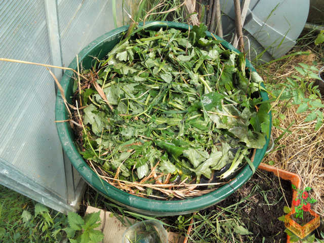Травяной настой