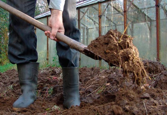 Удобрение участка компостом