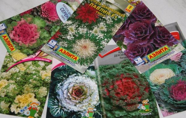 Пакетики с семенами декоративной капусты