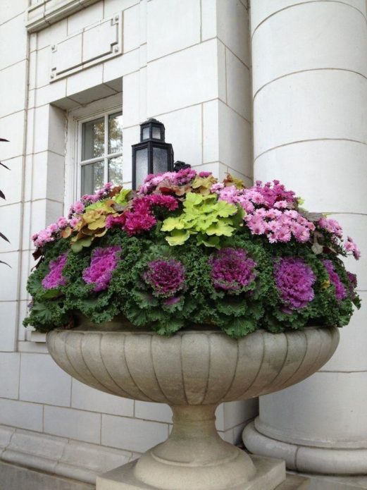 Декоративная капуста в вазоне