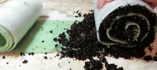 Посев семян капусты в улитку
