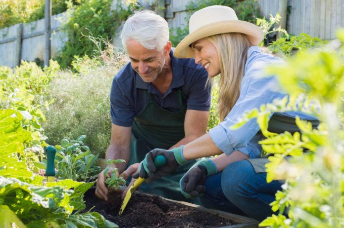 Мужчина и женщина высаживают базилик на грядку