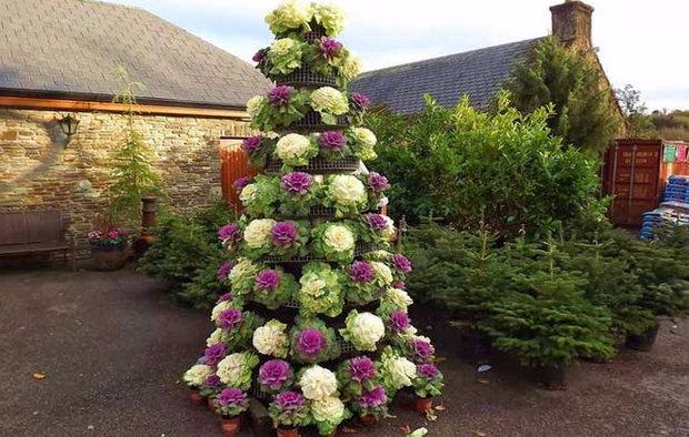 Декоративная капуста для вертикального озеленения