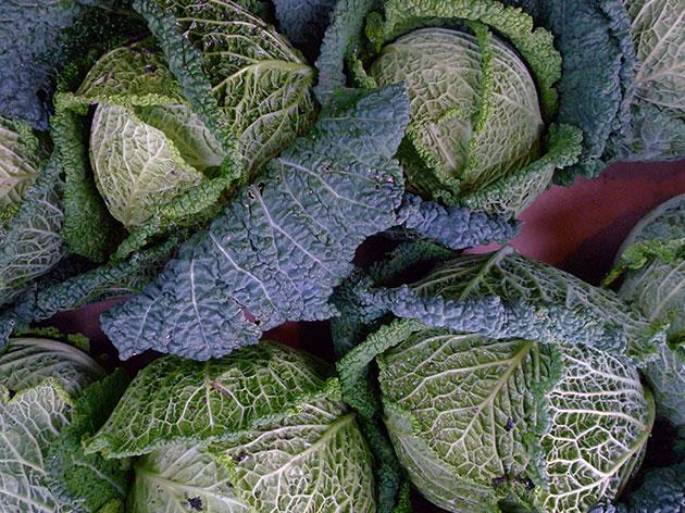 Декоративность савойской капусты