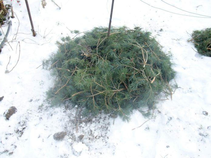 Укрытие на зиму