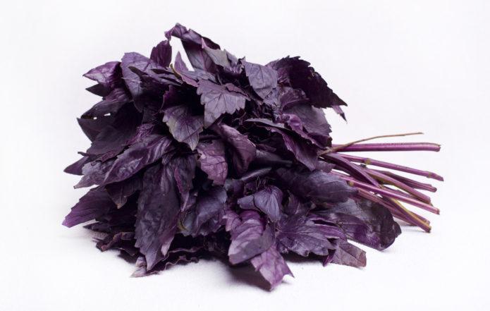 Базилик сорта Фиолетовый блеск