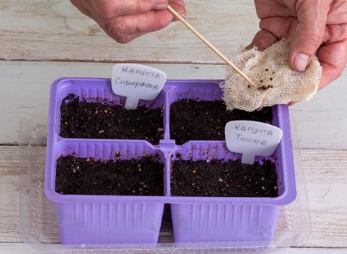 Посадка семян капусты