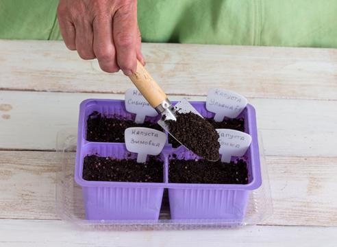 Грунт для капустной рассады