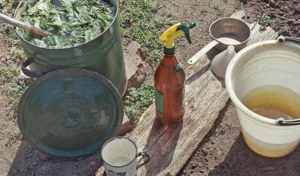 Настой крапивы для подкормки капусты