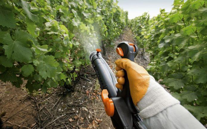 Обработка виноградных кустов от болезней и вредителей