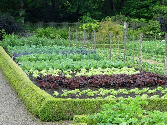 Кресс-салат рядом с капустой