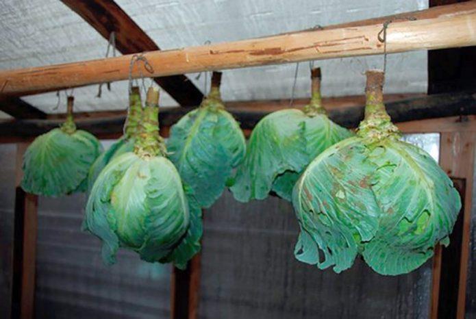 хранение савойской капусты