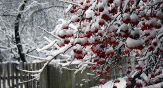 Калина красная в белом