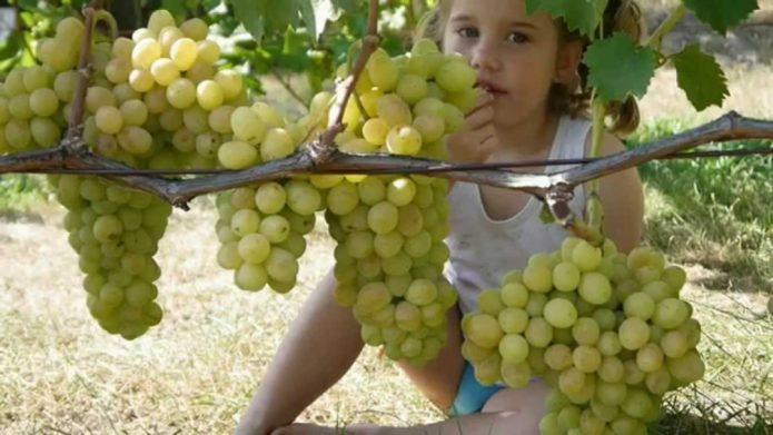 Девочка есть виноград с ветки