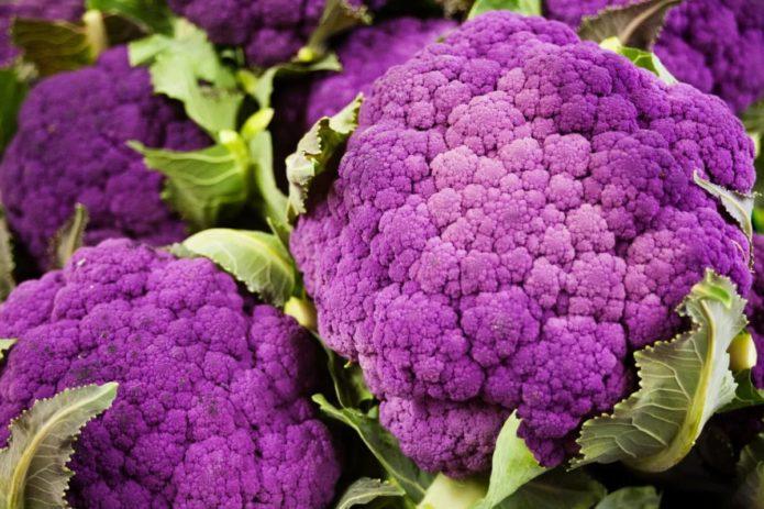 Сорт капусты Пурпурная