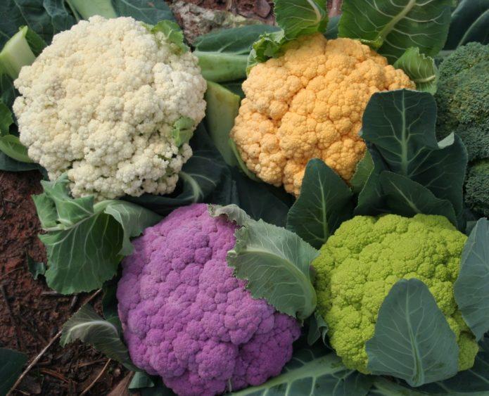 Цветная капуста разных сортов