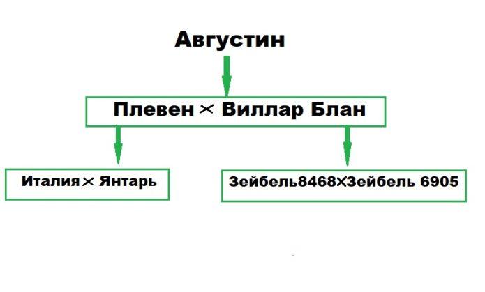 Верхушка генеалогического дерева