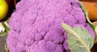 Цветная капуста Лиловый шар