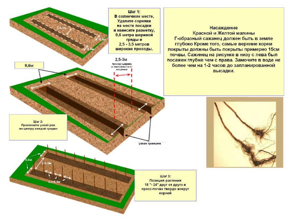 Схемы подготовки места для посадки малины