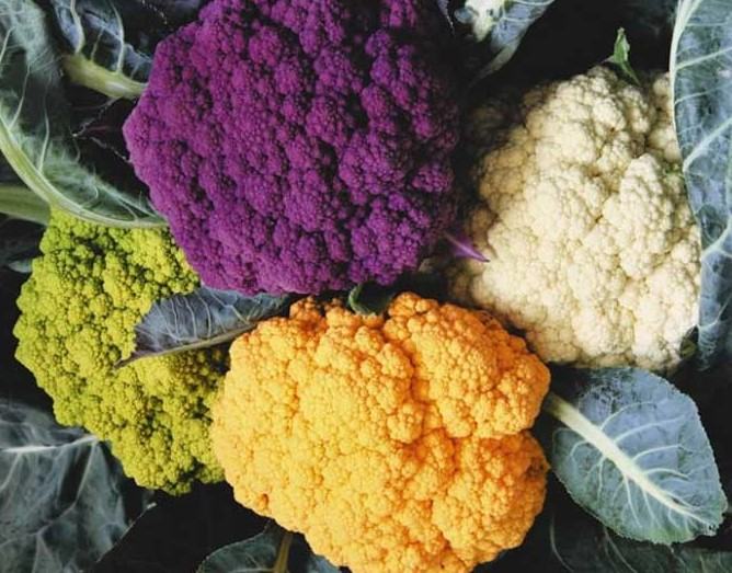 Разноцветные головки цветной капусты