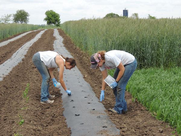 Проведение посева в нагретую почву