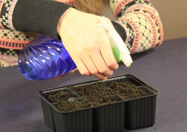 Увлажнение посевов из пульверизатора