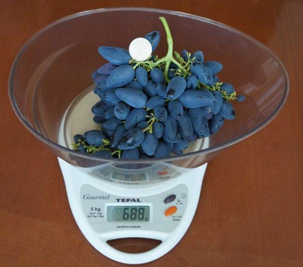 Виноград Викинг на весах