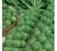 Сорт брюссельской капусты Розелла