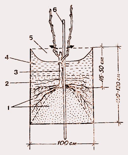 Схема посадочной ямы для винограда