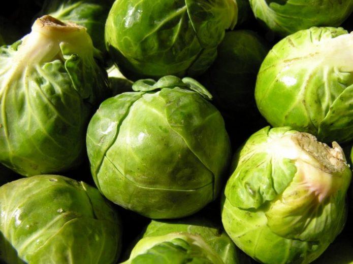 Сорт брюссельской капусты Сапфир