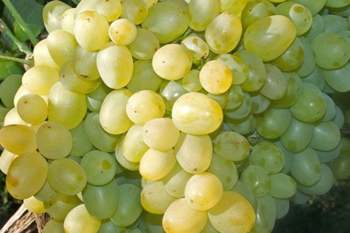 Гроздь винограда Супер Экстра