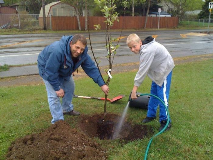 посадка деревьев весной советы специалиста