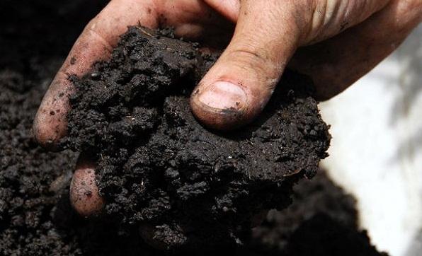 Проверка почвы на влажность