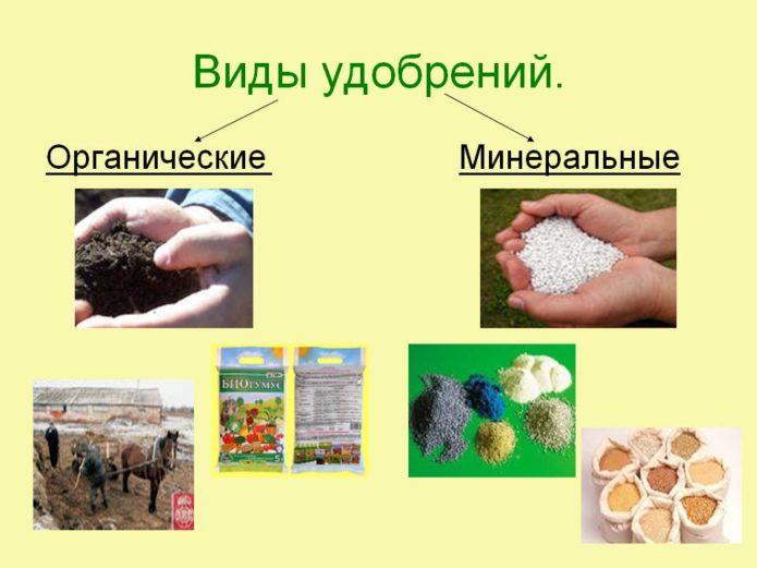 Органические и минеральные удобрения